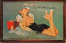 Shcweppes Are you a Schweppicure?